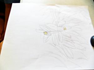 eyes orange blossom